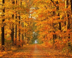 Autumn-Wallpaper-1